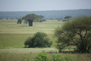 baobab-in-tarangire-national-park