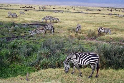 circuits-safari-tanzanie