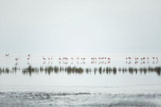 flamingoes-on-lake-natron-1