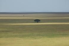 serengeti-national-park-1