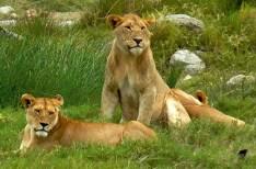 tailor-made-safaris