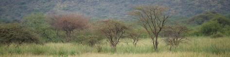 tanzania-landscape-2