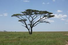 tanzania-landscape-3
