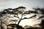 tanzania-landscape-4