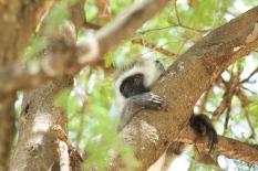 tanzania-monkeys